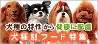 犬種別フード特集